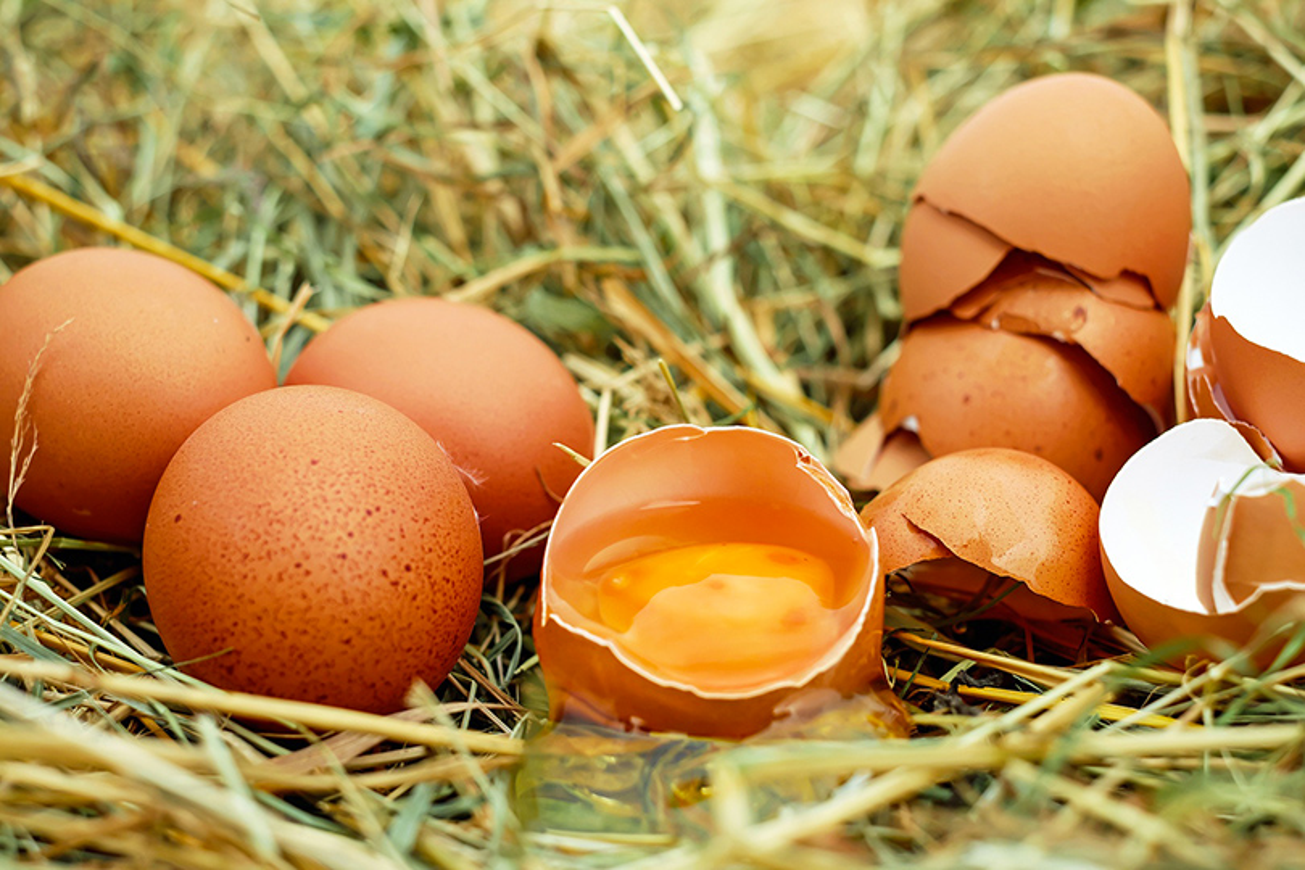 uova scadute ancora buone