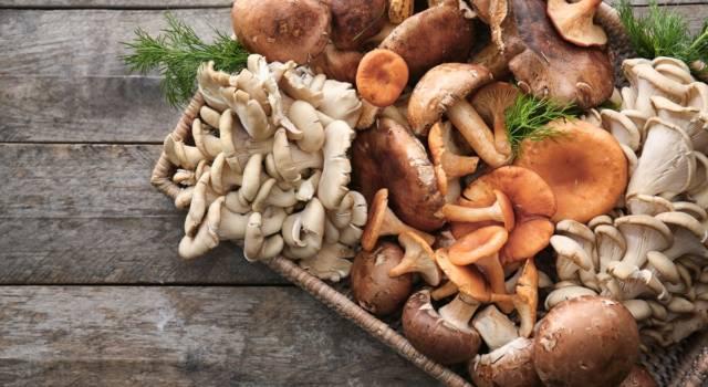 Ecco come pulire i funghi appena raccolti senza rovinarli