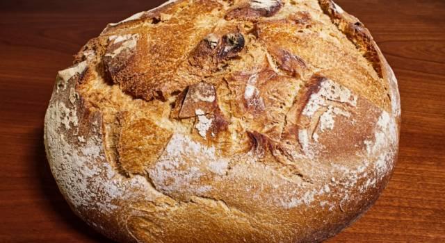 Scopriamo come fare il pane di Altamura, presidio DOP