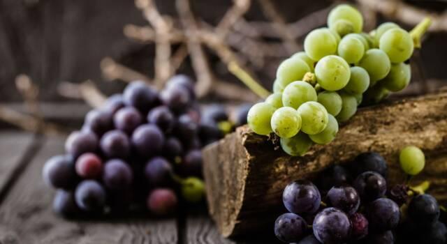Scopriamo i benefici (e le controindicazioni) dell'uva