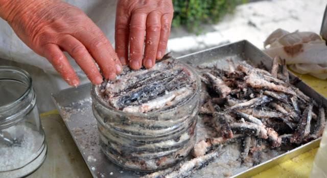 Qual è la differenza tra alici e acciughe? Cosa sono invece le sardine?