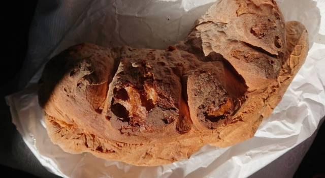 La ricetta originale del pane di Matera fatto in casa con lievito madre