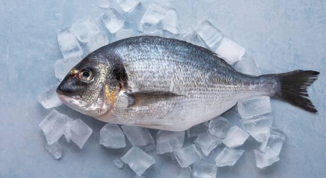 Come abbattere il pesce a casa? Le regole per la sicurezza in cucina