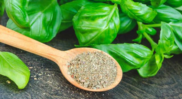 Come conservare l'aroma del basilico tutto l'anno?