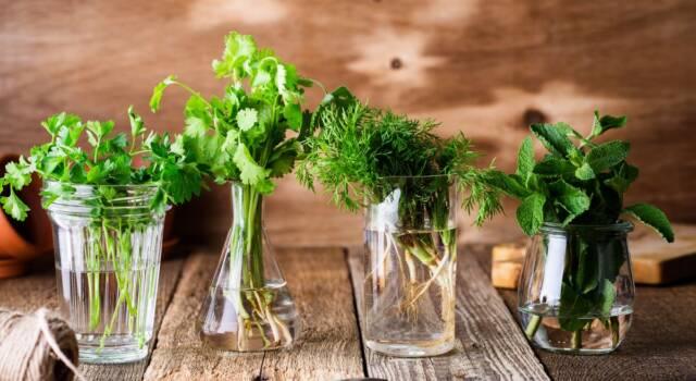 Come abbinare le erbe aromatiche senza fare errori!