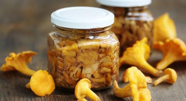 Finferli (o galletti) sott'olio: la conserva più gustosa al mondo